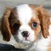 Пары животных: Собаки (More Matching Puppies)