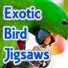 Пазл: Экзотические птицы (Exotic Bird Jigsaw Tournament)