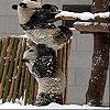 Пятнашки: Панды (Snow and pandas slide puzzle)