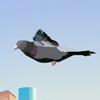 Веселый голубь (Funny bird)