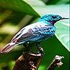 Пятнашки: Птичка (Alone blue bird slide puzzle)