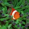 Пазл: Немо среди коралловых рифов (Nemo Among The Coral Reef)