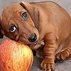 Пазл: Собака на яблоке  (Dog and apple puzzle)
