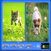 Поиск одинаковых предметов (Pet Animals Similarities)