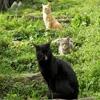 Пазл: Кошачье трио (Jigsaw: Cats Trio)
