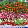 Поиск сердец: Цветочный сад (Hidden Hearts - Flower Garden)