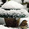 Пазл: Маленькая птичка (Little bird and snow puzzle)