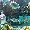 Пятнашки: Дельфины в океане (Ocean and dolphins slide puzzle)