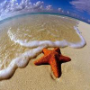 Поиск чисел: Фэнтези (Starfish find numbers)