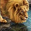 Пятнашки: Лев у воды (Big thirsty lion slide puzzle)
