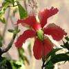 Пазл: Красный цветок (Jigsaw: Pale Red Flower)