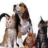 Пазл: Животные (Cute Animals puzzle)