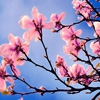 Пазл: Весна в саду (Jigsaw: Spring Tree)