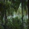 Пазл: Дождь в лесу (Rain Forest Jigsaw Game)
