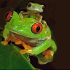 Пятнашки: Зеленые лягушки (Cute green frogs slide puzzle)