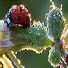 Пятнашки: Божья коровка (Alone ladybug slide puzzle)