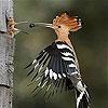 Передвижной пазл: птичка (Woodpecker family slide puzzle)