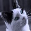 Пазл: Голубые глаза (Jigsaw: Blue Eyes)