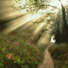 Поиск чисел: Солнечный лес (Sunny forest find numbers)