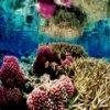 Пазл: Коралы (Coral Reef Jigsaw)