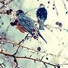 Пятнашки: Птицы (Seed birds slide puzzle)