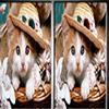 Поиск отличий: Животные (Pet Animals Spot The Difference)