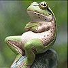 Пятнашки: Лягушка (Sweet green frog slide puzzle)