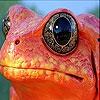 Пятнашки: Оранжевая лягушка (Orange frog slide puzzle)