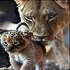 Пятнашки: Кошачья семья (Cat family slide puzzle)