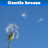 Пять отличий: Одуванчик (Gentle breeze 5 Differences)