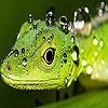 Пазл: Ящерица (Green lizard puzzle)