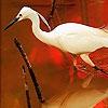 Пазл: Птица на красном озере (Bird and red lake puzzle)