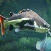 Пятнашки: Сом (Catfish Slider)