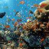 Поиск предметов: Морская прогулка (Marine walk. Find objects)