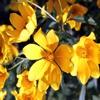 Пазл: Полевые цветы (Jigsaw: Yellow Wildflowers)