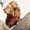 Пятнашки: Король-Лев (Big king lion slide puzzle)