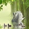 Пазл: Прекрасные утки (Beautiful ducks on the lake puzzle)