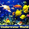 Поиск предметов: Подводный мир (Underwater World)