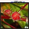 Пазл: Цветы (Flower Bud Jigsaw)
