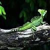 Пятнашки: Ящерка (Green  lizard slide puzzle)