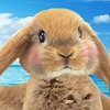 Одевалка: Наряд для зайчика (Super Cute Bunny Dress Up)