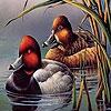 Поиск чисел: Утки (Fabulous ducks hidden numbers)