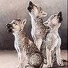 Пятнашки: Волчата (Three cute wolf slide puzzle)
