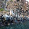 Пазл: Галапагосские острова (Galapagos Islands Jigsaw)