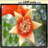 Пазл: Цветок (Flower Jigsaw)