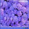 Поиск звезд в цветах (Hidden Stars Flowers)