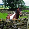 Пазл: Любопытная лошадь (Jigsaw: Curious Horse)
