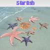 Поиск предметов: Морская звезда (Starfish. Find objects)