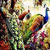 Пятнашки: Сказочный павлин (Dream peacocks slide puzzle)
