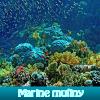 Поиск предметов: Мятежное море (Marine mutiny)